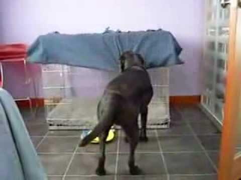 Smart Dog...