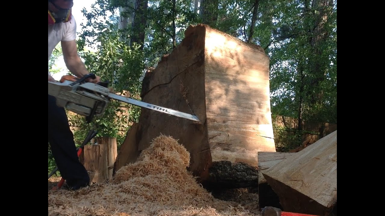 f965a1498bc STIHL MS441 MAGNUM MS 441 CHAINSAW More 36 Inch Bar Cutting - YouTube