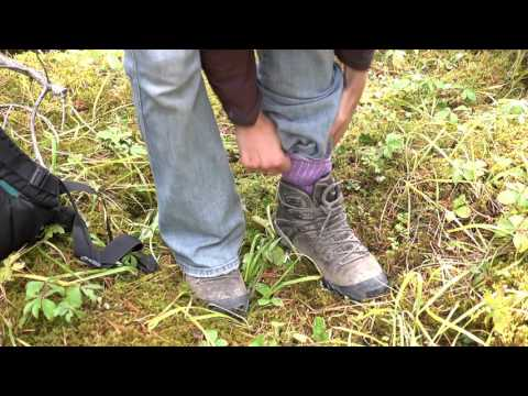 Wood Tick Safety Overview