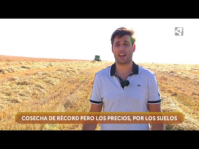 Tiempo de cosecha del cereal