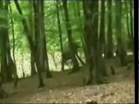 Behçet Gülas - Kül Oldum (Official Video)