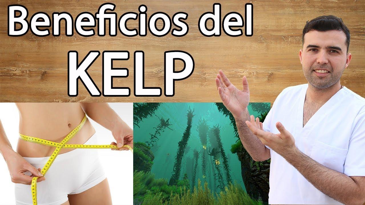 kelp de mare pierde în greutate)