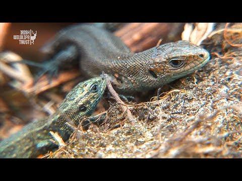 National Reptile Survey 2017