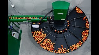 Gambar cover Apple sorting machine Green Sort Vision- work and production