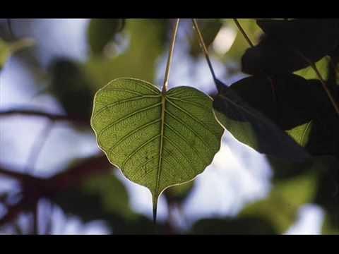 Bodhi Pujawa ||| බෝධි පුජාව |||.