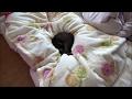 布団に埋まる猫 Sleeping cat