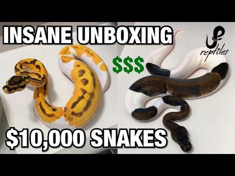 INSANE UNBOXING FROM JKR/OZZY BOIDS $$$ 8 NEW SNAKES | BALL PYTHONS #REPTILES #BALLPYTHON #SNAKES