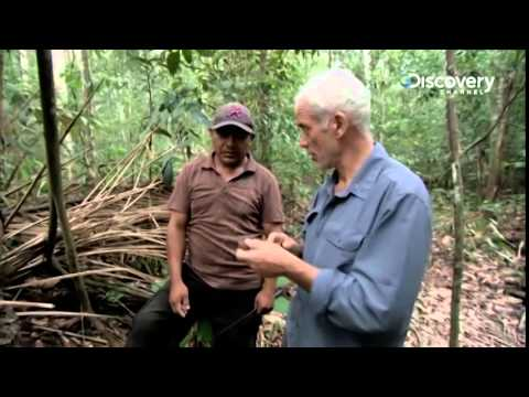 Câu Cá Rừng Amazon 6