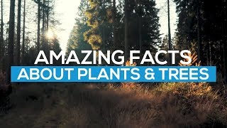 AMAZING FACTS ABOUT PLANTS (Get smarter Everyday)