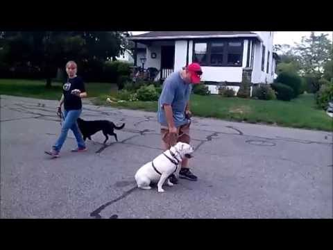Rosie and Bella's Leash Re...