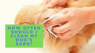 How Often Should I Clean My Dog's Ears?