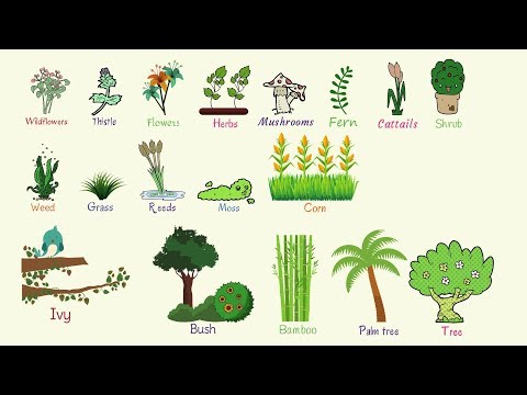Plant Names List Of Common Types