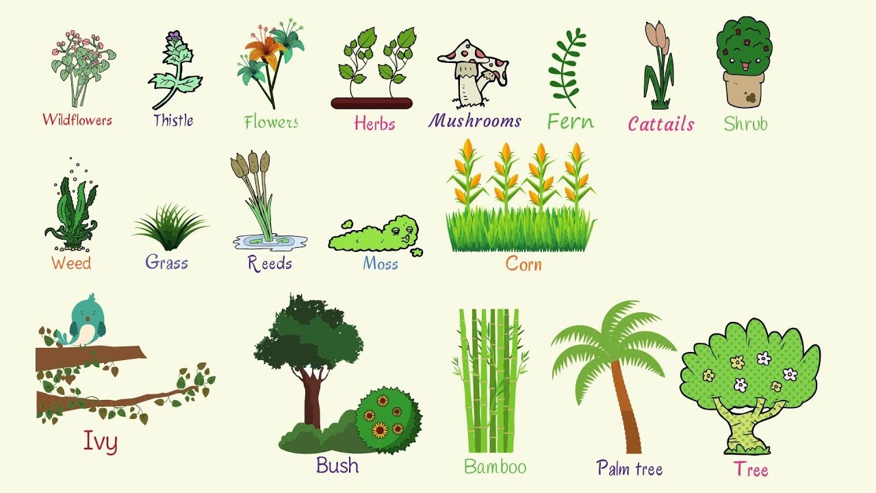 plants and trees vocabulary learn plant names in english youtube