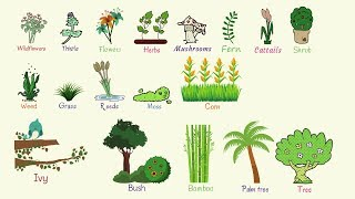 Plant Names: List of Common Types of Plants and Trees in English with Pictures