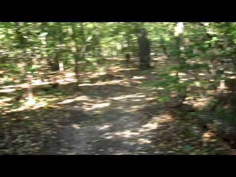 Walking Through the Woods Walking the Dog