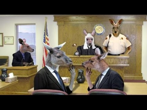 D. I. Y. Kangaroo Courts Part 2 - Some things to do if they drag you in there and more,