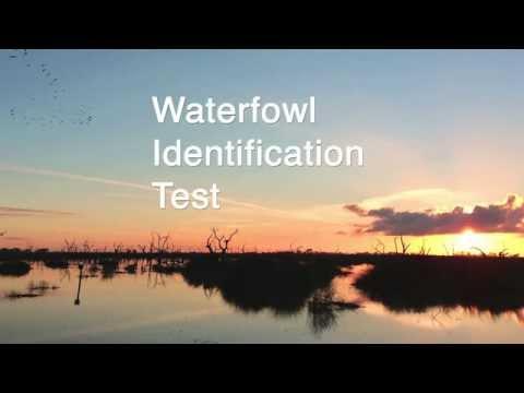 Waterfowl Identifcation Practice Test
