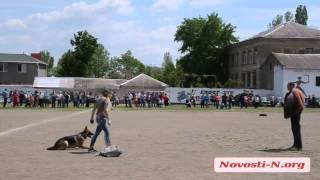 Видео Новости-N: В Николаеве проходит выставка собак