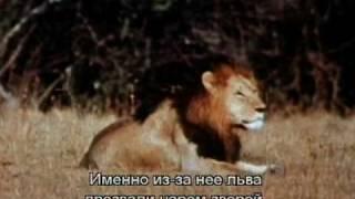 Про мультфильм Король Лев (The Lion King) (1)