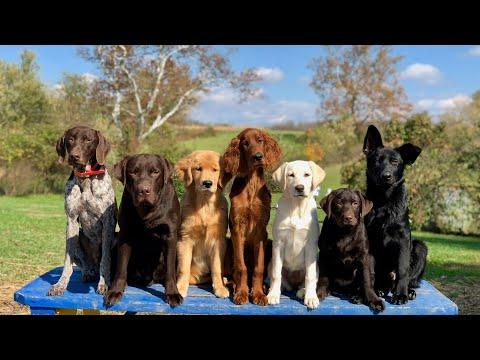 Professional Dog Training - The Most Important Thing You can Teach Your Puppy!
