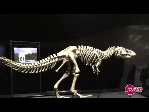 COSI Dinosaur Gallery Preview