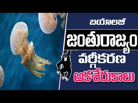 TET/TRT & DSC || Animal Kingdom classification || Biology Telugu Medium