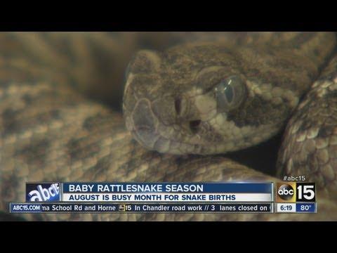 abc15:-watch-out,-it's-rattlesnake-season