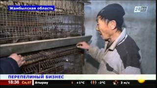 видео Бизнес-план птицефабрики