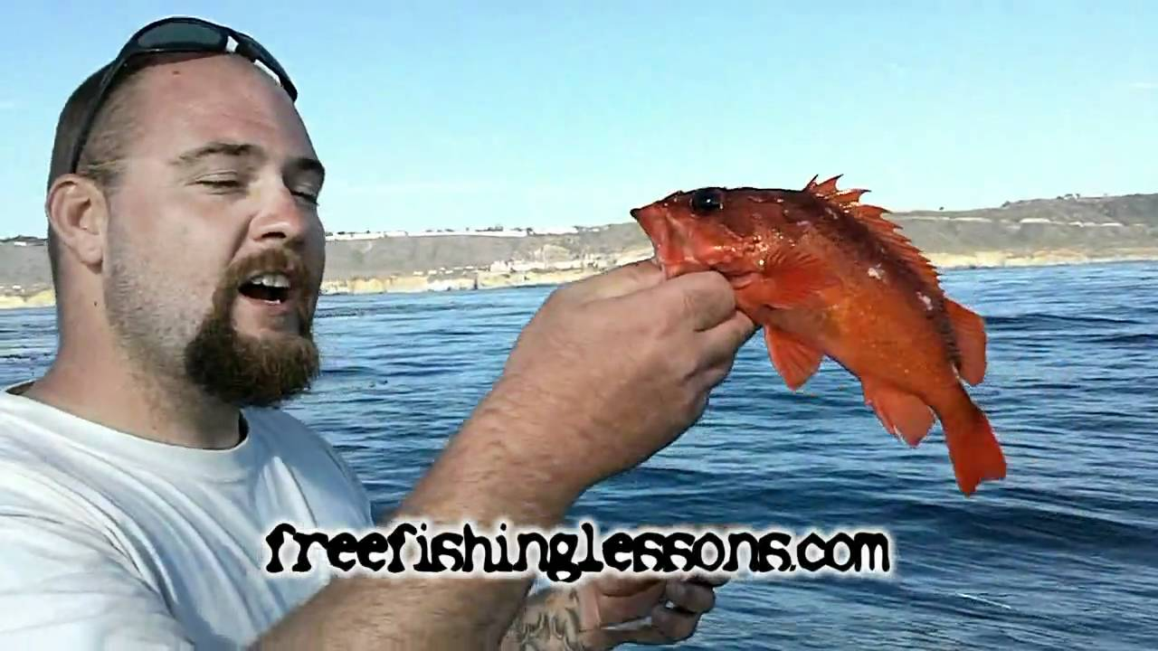 Fishing san diego kelp youtube for Point loma fish counts