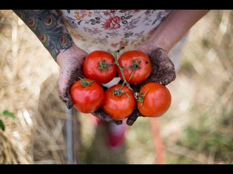 How to Grow The Best Tomatoes | Gardening Tips and Tricks