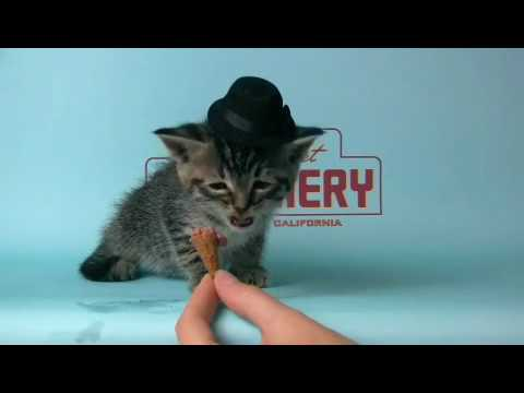 Thumbnail for Cat Video Kitten Wearing a Tiny Hat Eats a Tiny Ice-Cream Cone