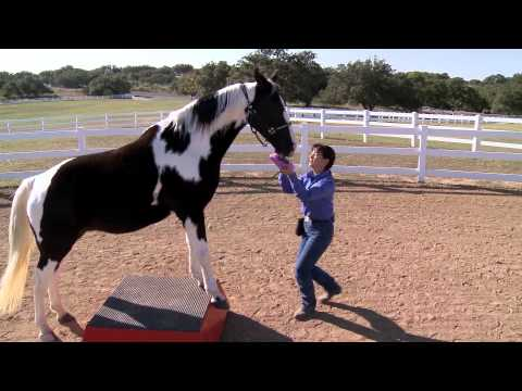 Get FREE Horse Training Videos With the Purchase of Manna Pro Horse Treats!