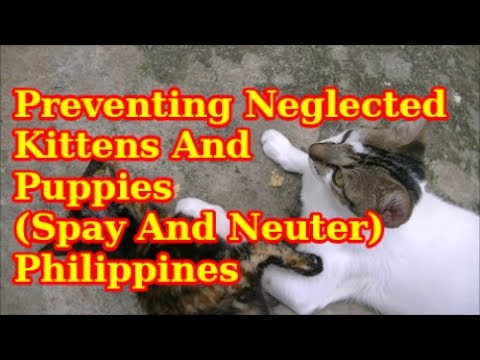 Preventing Neglected Kittens And Puppies Spay And Neuter Philippines