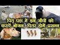 Pitru Paksha: पितरों को करना है प्रसन्न तो इन जीवों को कराएं भोजन  Boldsky