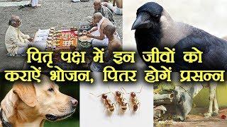 Pitru paksha: पितरों को करना है प्रसन्न तो इन जीवों को कराएं भोजन |boldsky