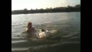 ротвелер купаЕтся