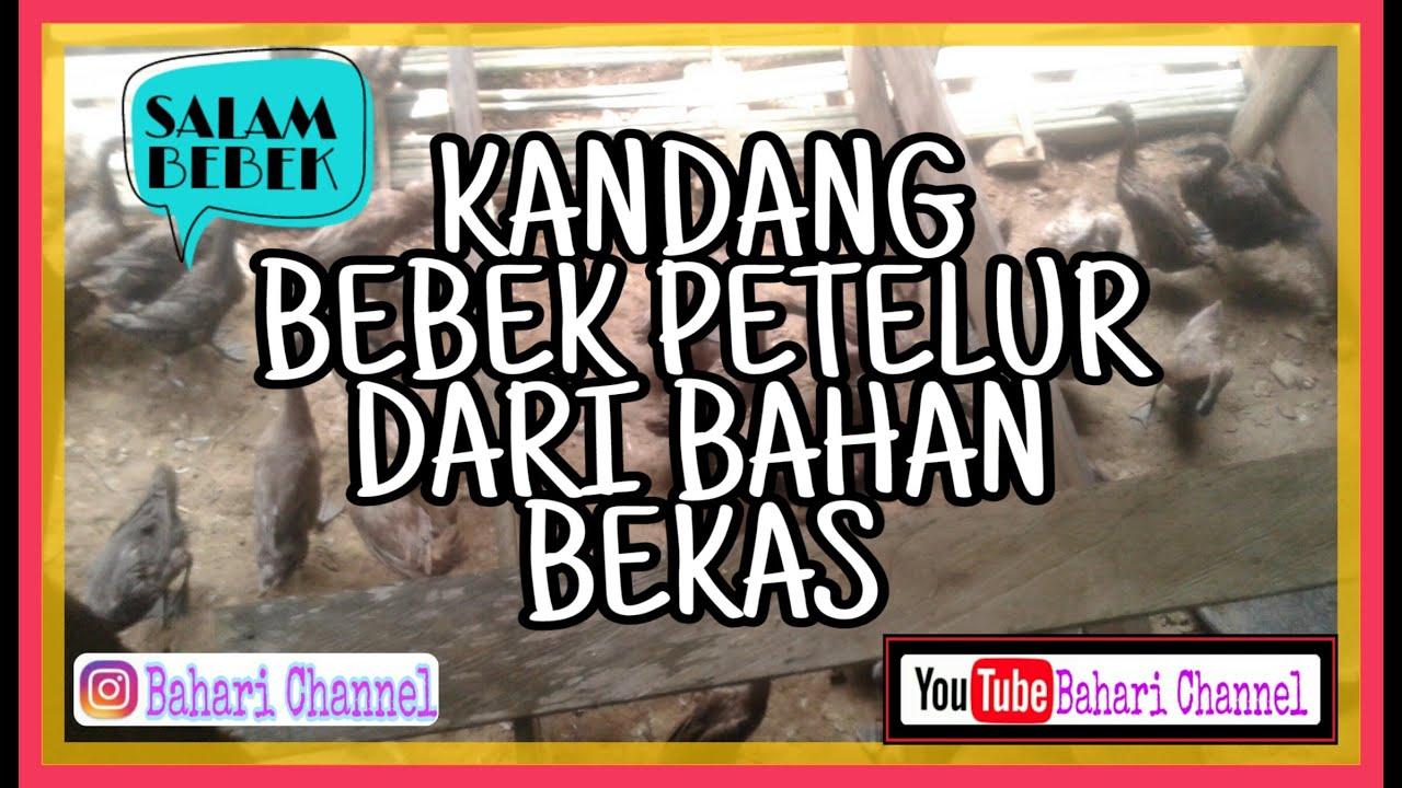 kandang bebek petelur modern - YouTube