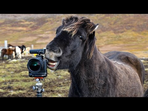 Wild Iceland - Traditional Horse Muster