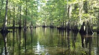 Brief Beautiful Video of Louisiana Swamp Teaches Powerful Lesson on Government