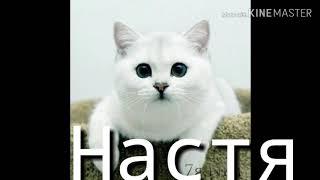 Котята по именам