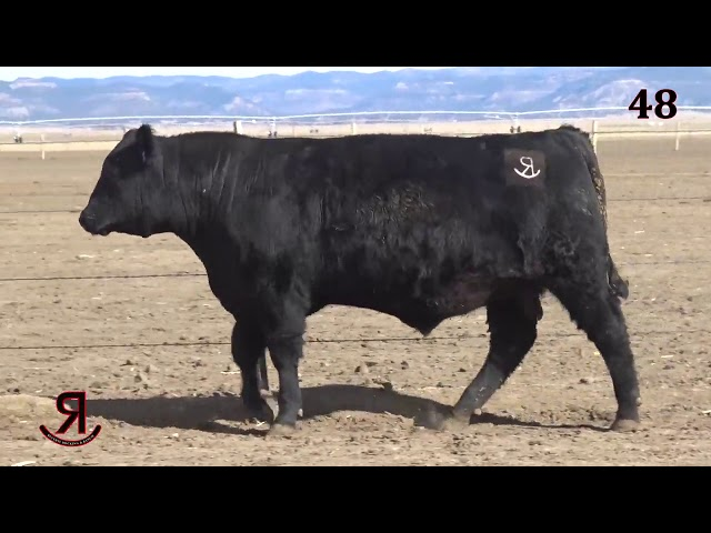 Reverse Rocking R Ranch Lot 48