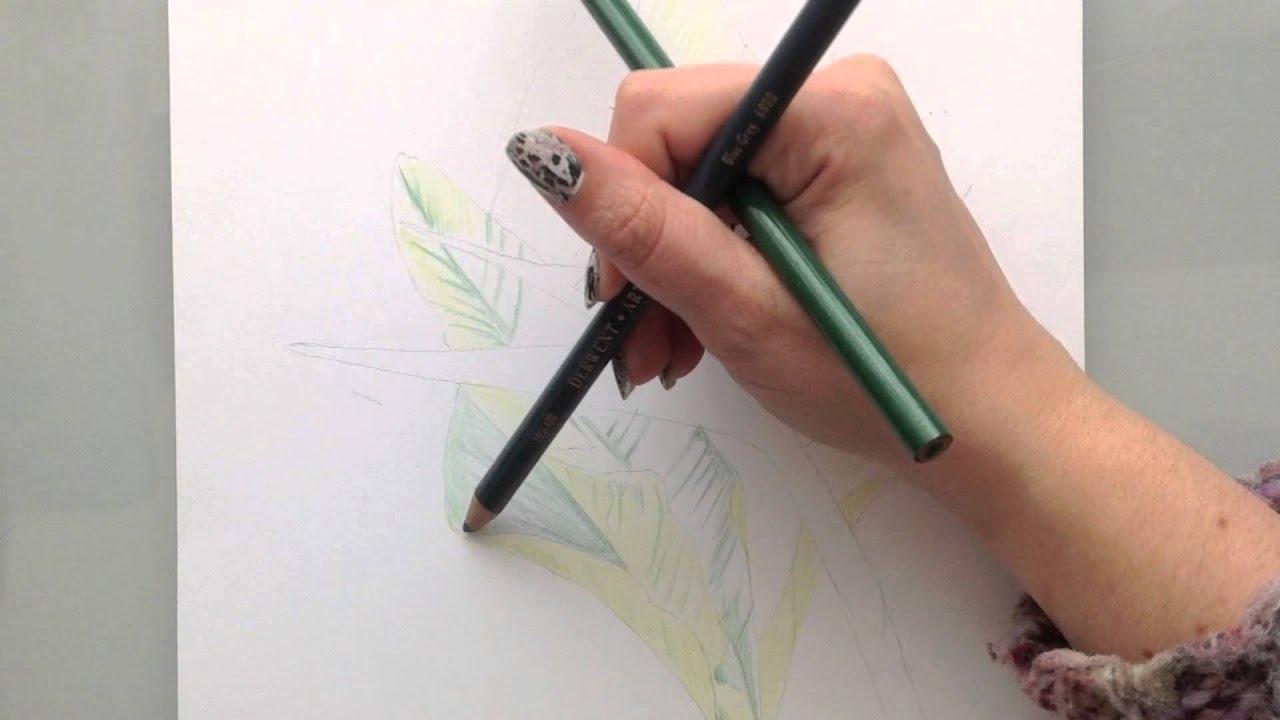 Apprendre A Dessiner Fleur Aux Crayons De Couleur Partie 1 Les