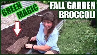How To Grow Fall Broccoli | Green Magic In The Raised Bed Garden
