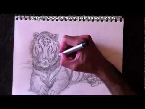 Dessiner un tigre avec paolo morrone youtube - Comment dessiner un tigre ...
