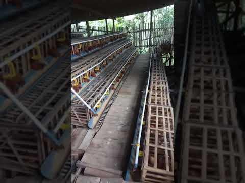 modal Ayam petelur 500 ekor modal 50 jutaan - YouTube
