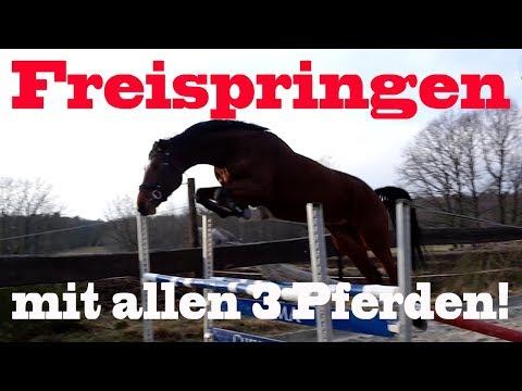 FREISPRINGEN | Püppi hebt ab! | MA Chevaux De Sport