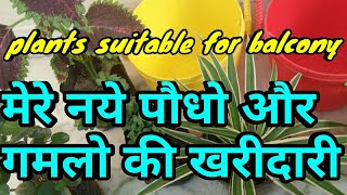 new plants shopping,मेरे नये पौधो और गमलो की खरीदारी,plants suitable for balcony,anveshas creativity