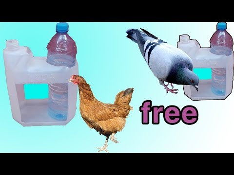 how to make a water feeder for birds صنع سقاية للطيور