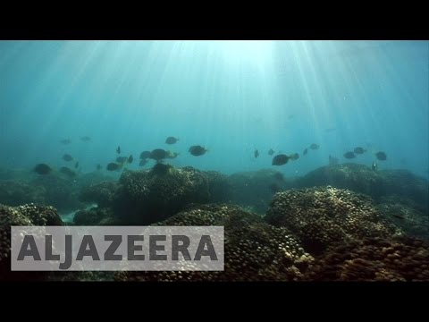 With world's oceans in danger, Mexico's Cabo Pulmo shows the way