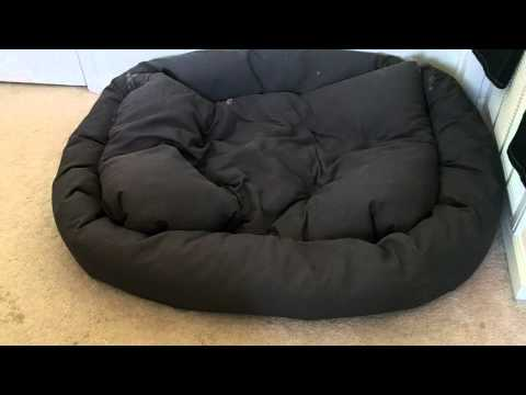 XL Mammoth Dog Bed Review - Luke Skywalker Great Dane